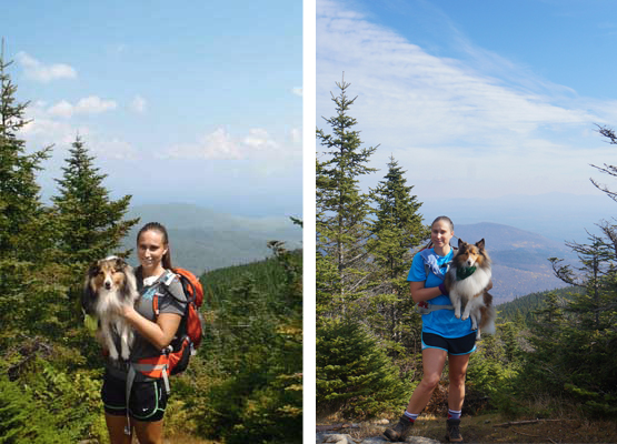 near summit mount cabot mt.cabot nh 4000 footers sheltie shetland sheepdog wendy theberge