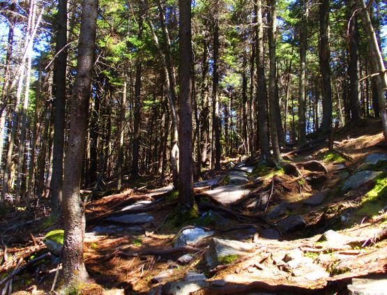 hiking trail mount kearsarge