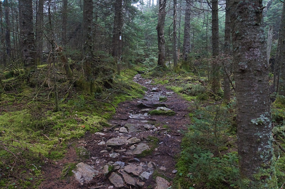 Hike Bread Loaf Mountain Vermont VT New England Hundred Highest ...